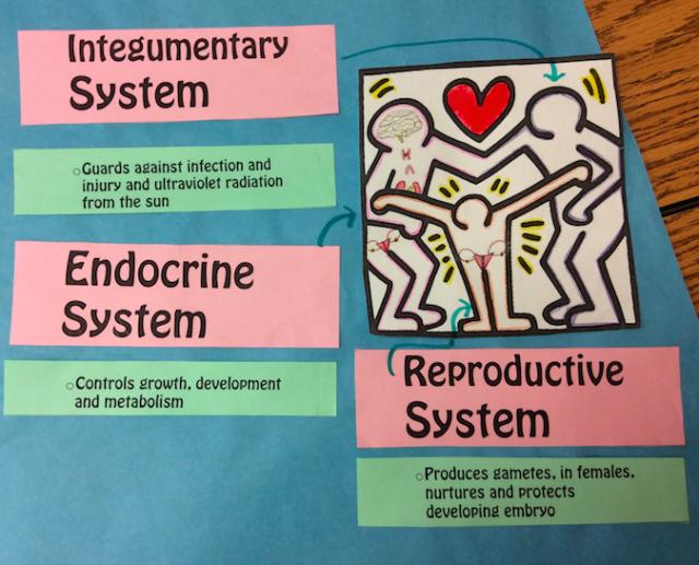 Organ Systems Mural